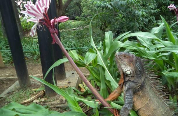 Medellín-Colombia-lagarto-Jardin-Botanico
