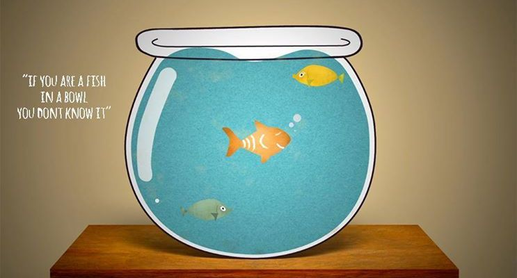The-Real-Me-Fish-in-a-bowl