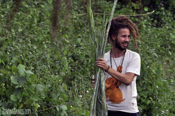 Voluntario Recolectando Bambu Laos