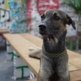 Casa-Do-Professor-perro-Vagalume