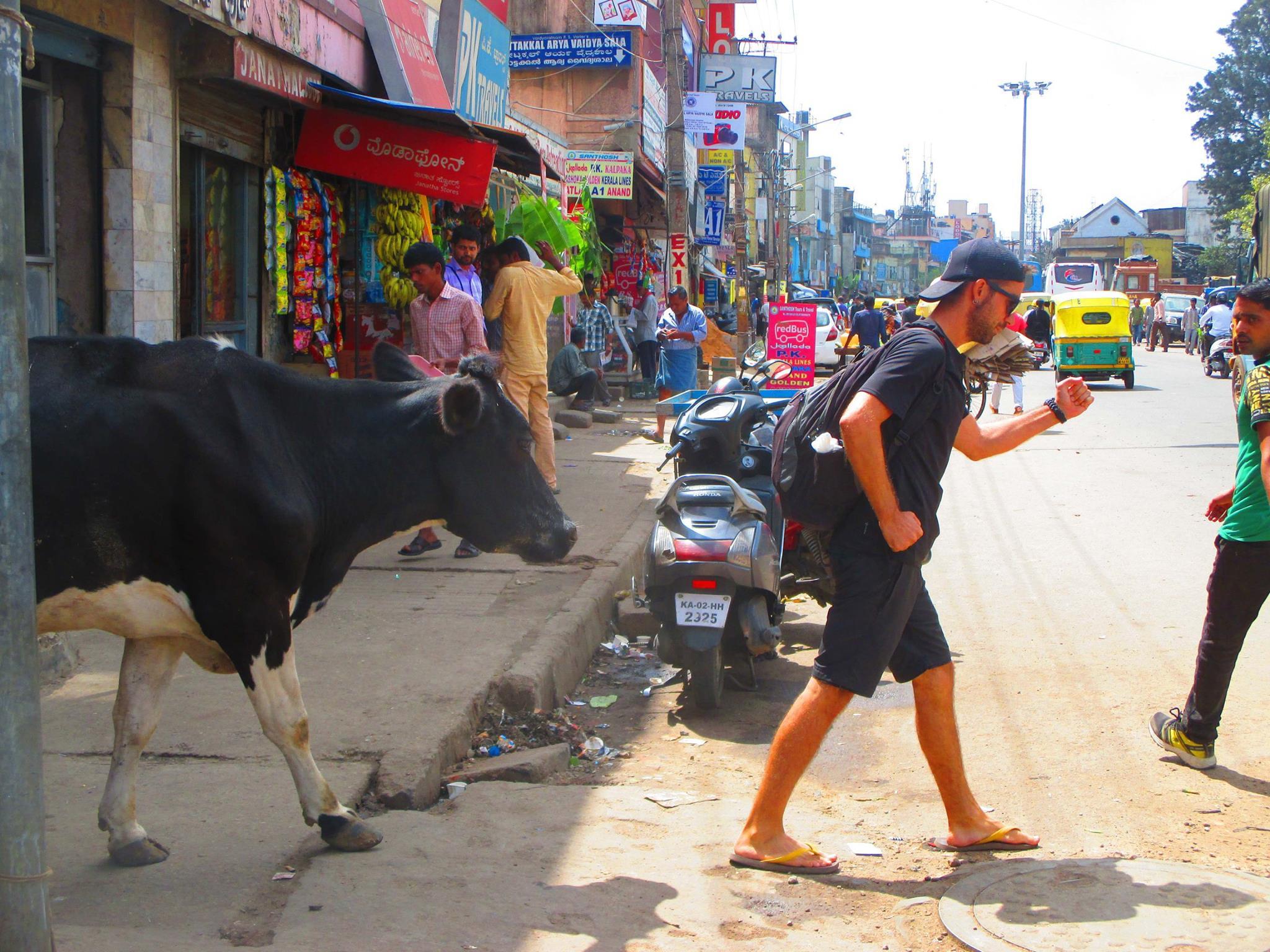 Viviendo por el Mundo, Iván con una vaca en Bangalore, India