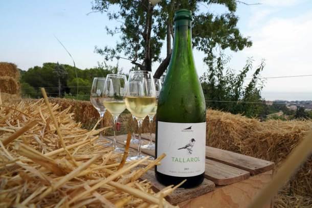 Cata de vinos de DO Alella