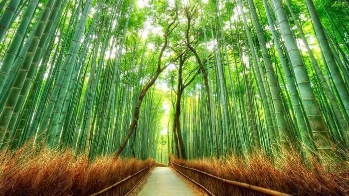 qué ver en arashiyama