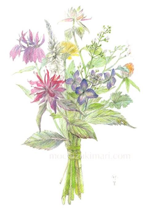 「香る庭・母の庭のブーケ」 望月麻里(鉛筆、色鉛筆)illustrated by Mari Mochizuki