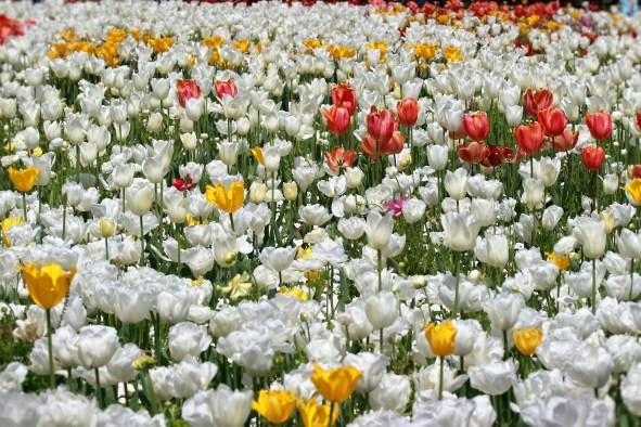 flower-bed-x-2