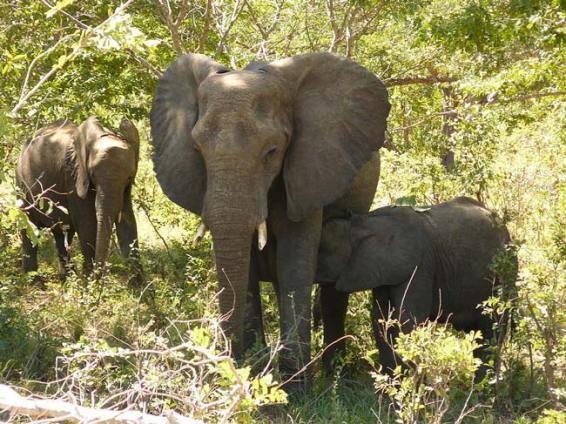 elephants-chobe-national-park