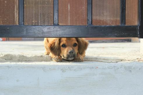 european youth project in Galati Romania dog