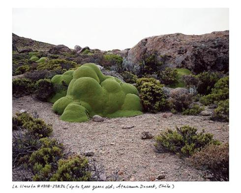 world's oldest plant