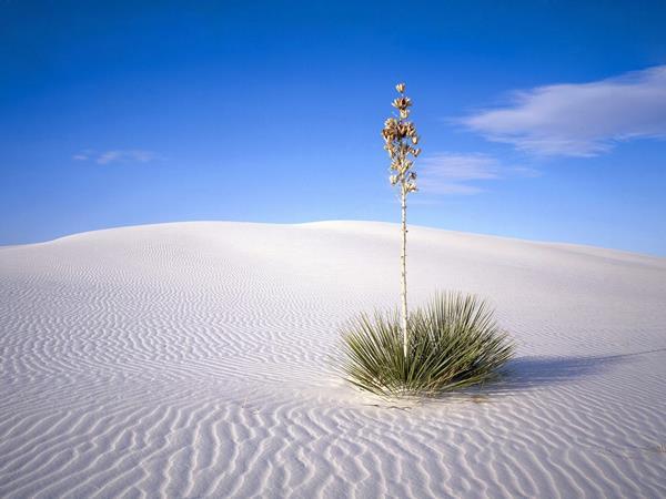 Hạt cát nhỏ