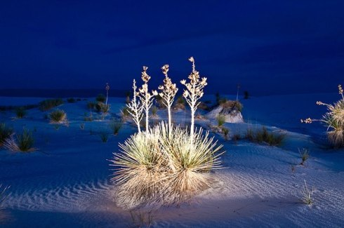 White Sands National Monument 12