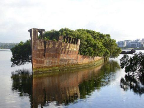 Homebush Bay unusual floating forest 2