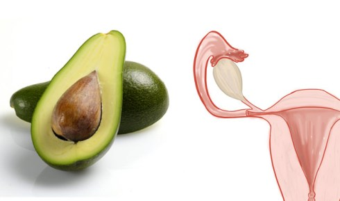 hyppocrates nutrition nourishing properties of avocado