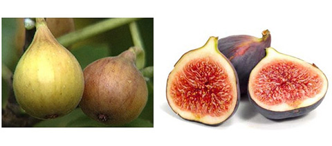 hyppocrates nutrition nourishing properties of figs
