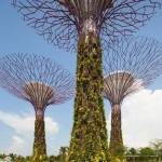 best attractions in Singapore, Bay Gardens 11