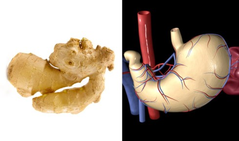 hyppocrates nutrition nourishing properties of ginger