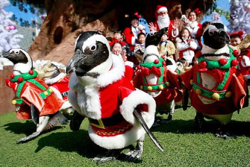 Penguins in Santa suits to welcome Christmas 8