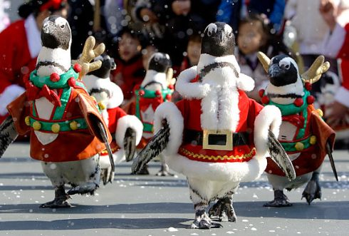 Penguins in Santa suits to welcome Christmas 10