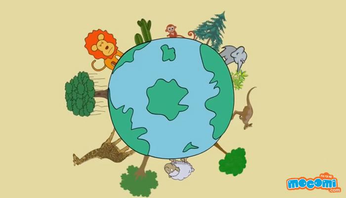 Biodiversity - Environment For Kids   Mocomi