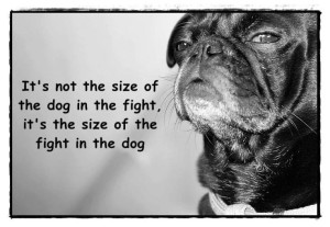 Fight in the dog