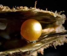 natuurparel in oester