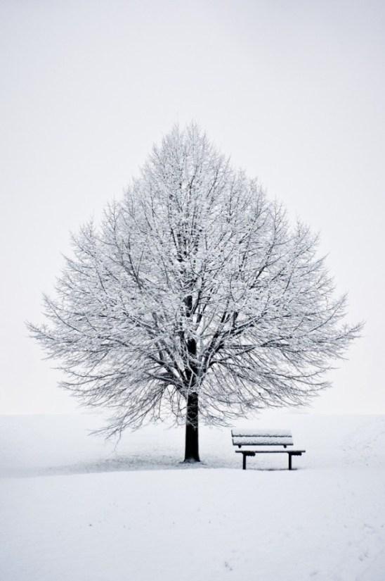 paysage-hivernal