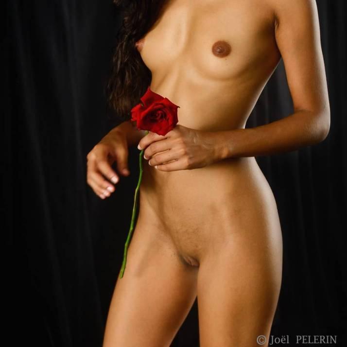 Cette rose