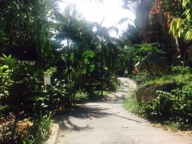 My trek to the yoga sala everyday. Not too shabby?!