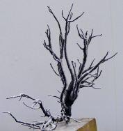 Nicks Winter tree stark but brilliant