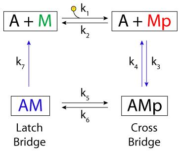Hai, Murphy, 1988 — Physiome Model Repository