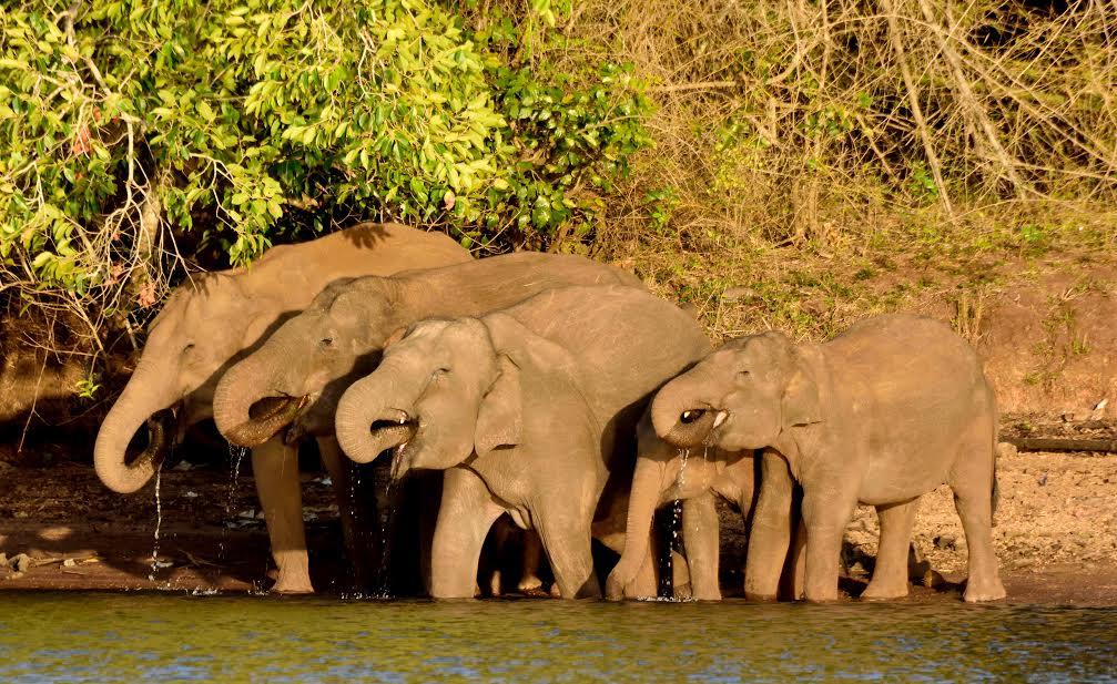 Elephant-Wildlife-Photography
