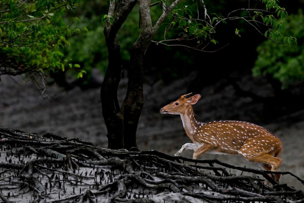 dear wild life photography