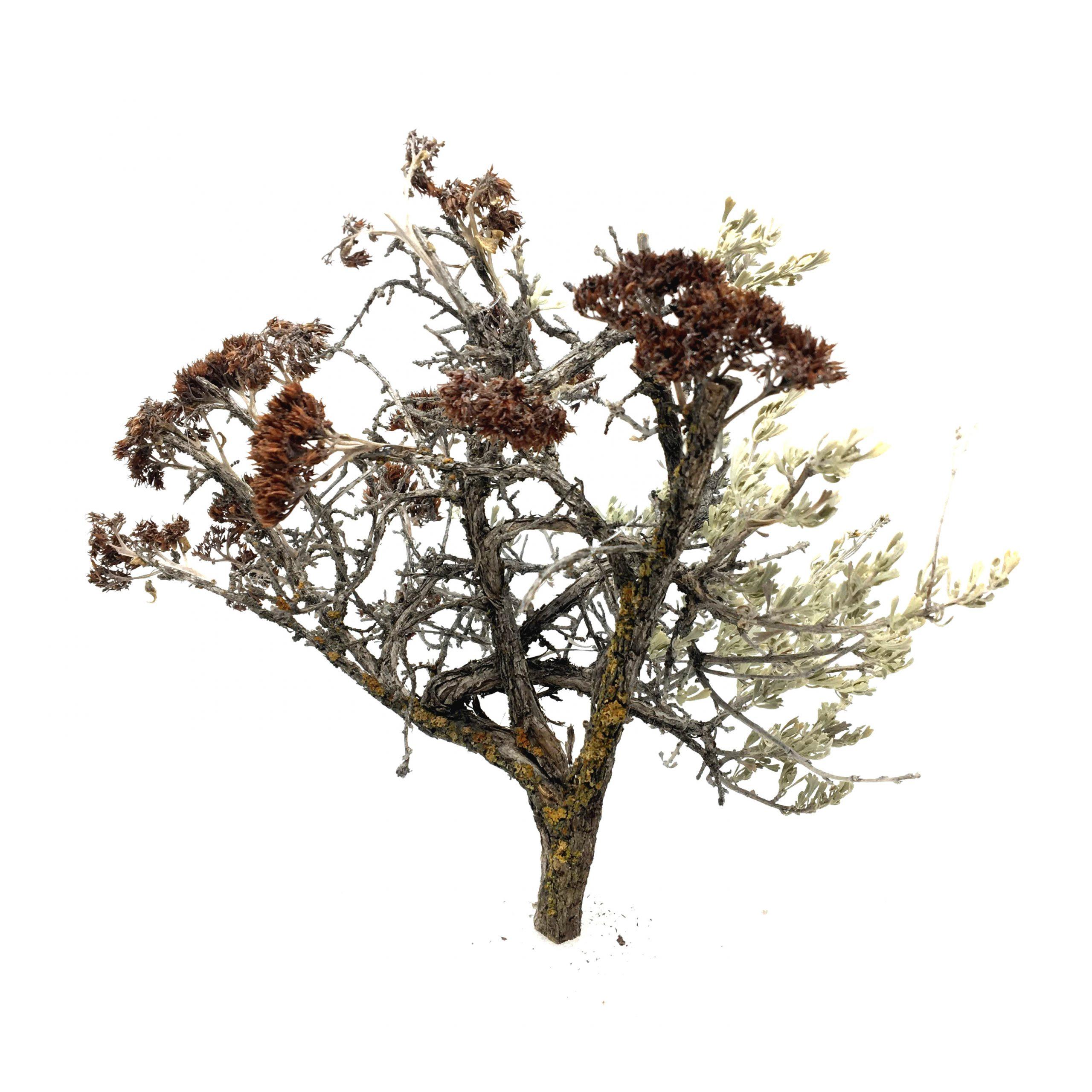 5 Inch Model Trees