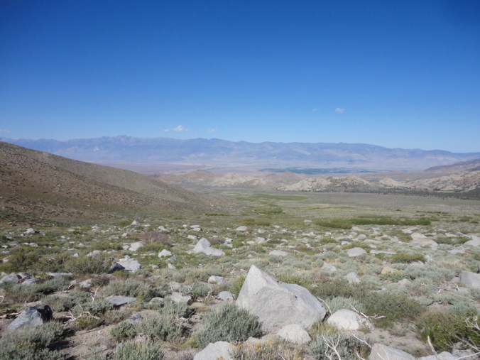 The Inyo National Forest demonstrates that not all forests have trees.