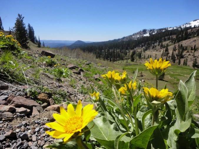 Early summer in Lassen National Park.