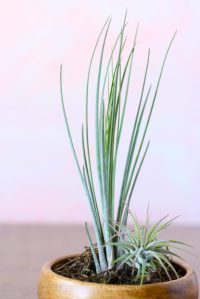 Super Easy Air Plant Container Ideas Takes Air Plants to ...