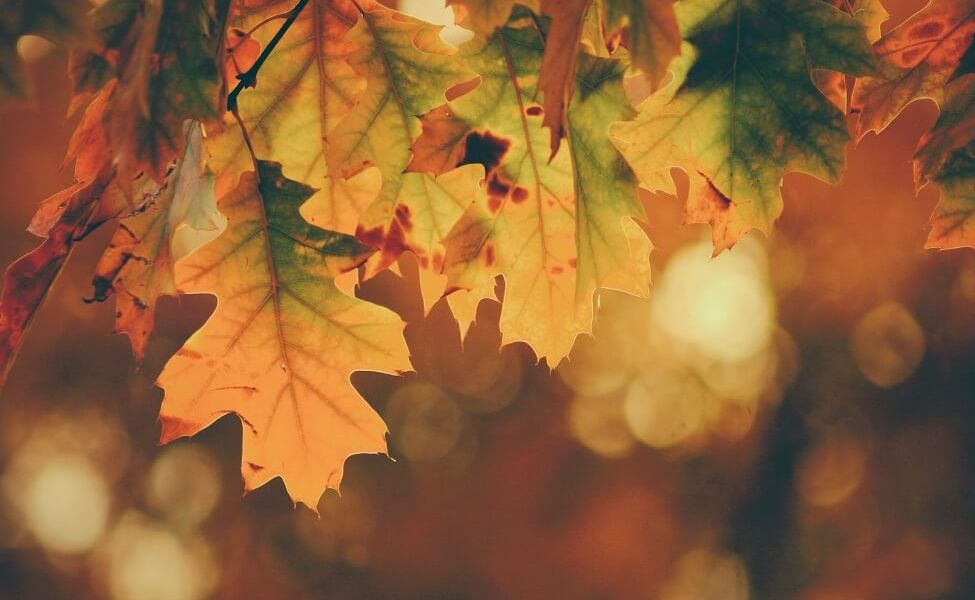 Jesień keto