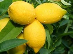 Eco-Friendly Uses for Lemons