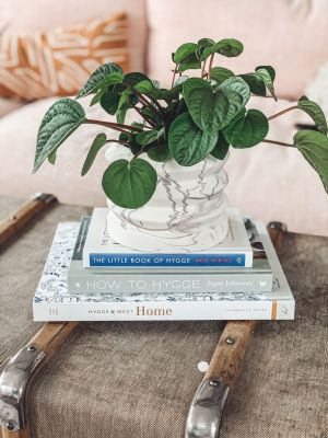 Easy Care Indoor House Plants featured by top US lifestyle blog Modern Day Moguls