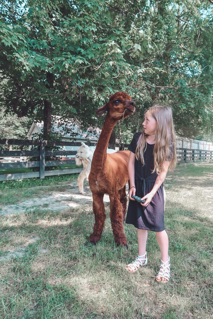 Mistletoe Farm Alpacas featured by top US lifestyle blog Modern Day Moguls