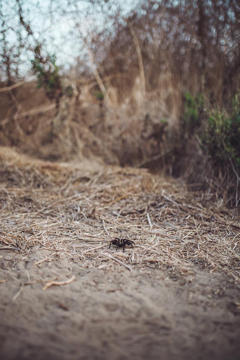 California Vacation Ideas for a Momcation in Orange County by popular Nashville travel blog, Modern Day Moguls: image of a tarantula.