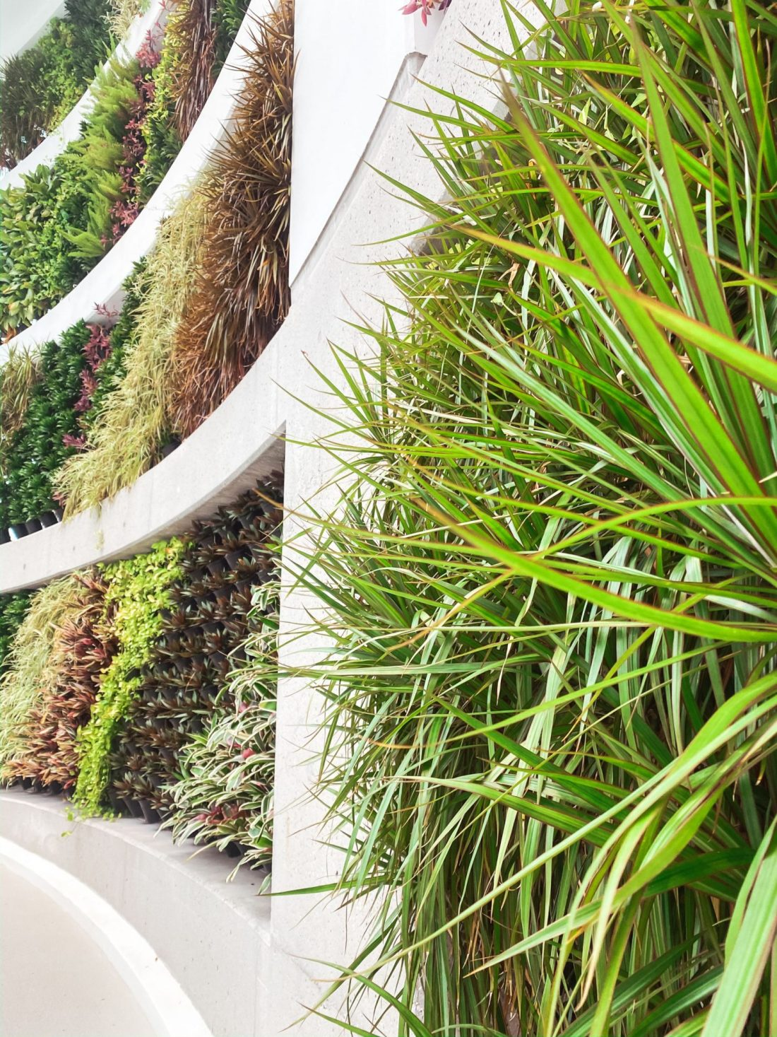 Soundwaves Water Park by popular Nashville blog, Modern Day Moguls: image of a plant wall.