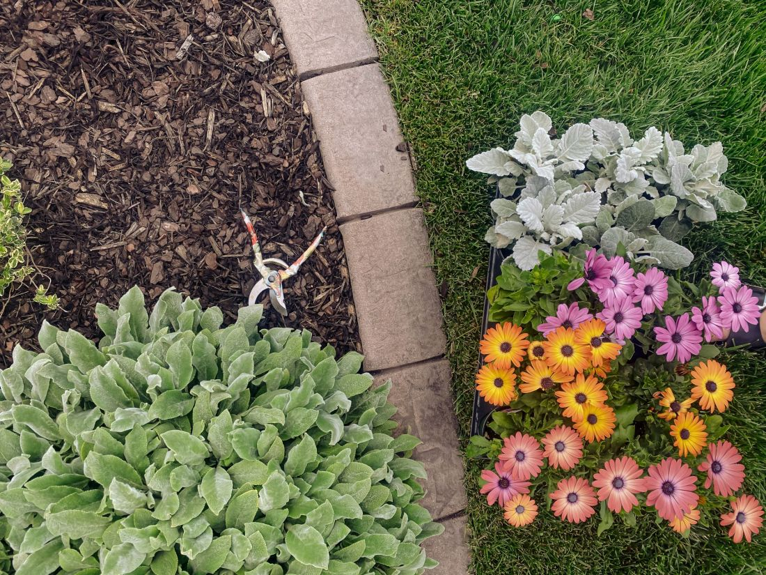 Spring Home Maintenance by popular Nashville lifestyle blog, Modern Day Moguls: image of some flowers next to a garden bed filled with wood chips.