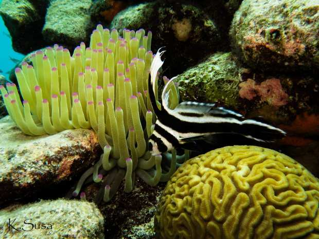 fish_house_reef