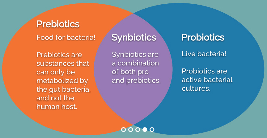 Probiotics And Prebiotics  Can They Improve Ms Symptoms