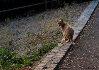 Day 208 - Euro kitty 2