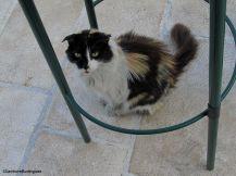 Day 208 - Euro kitty 3