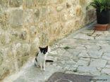 Day 208 - Euro kitty 6