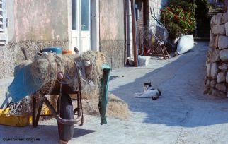Day 215 - Kitty and wheelbarrow