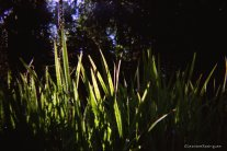 Day 245 - Sun and grass