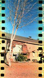 rs Tree and wagon wheel
